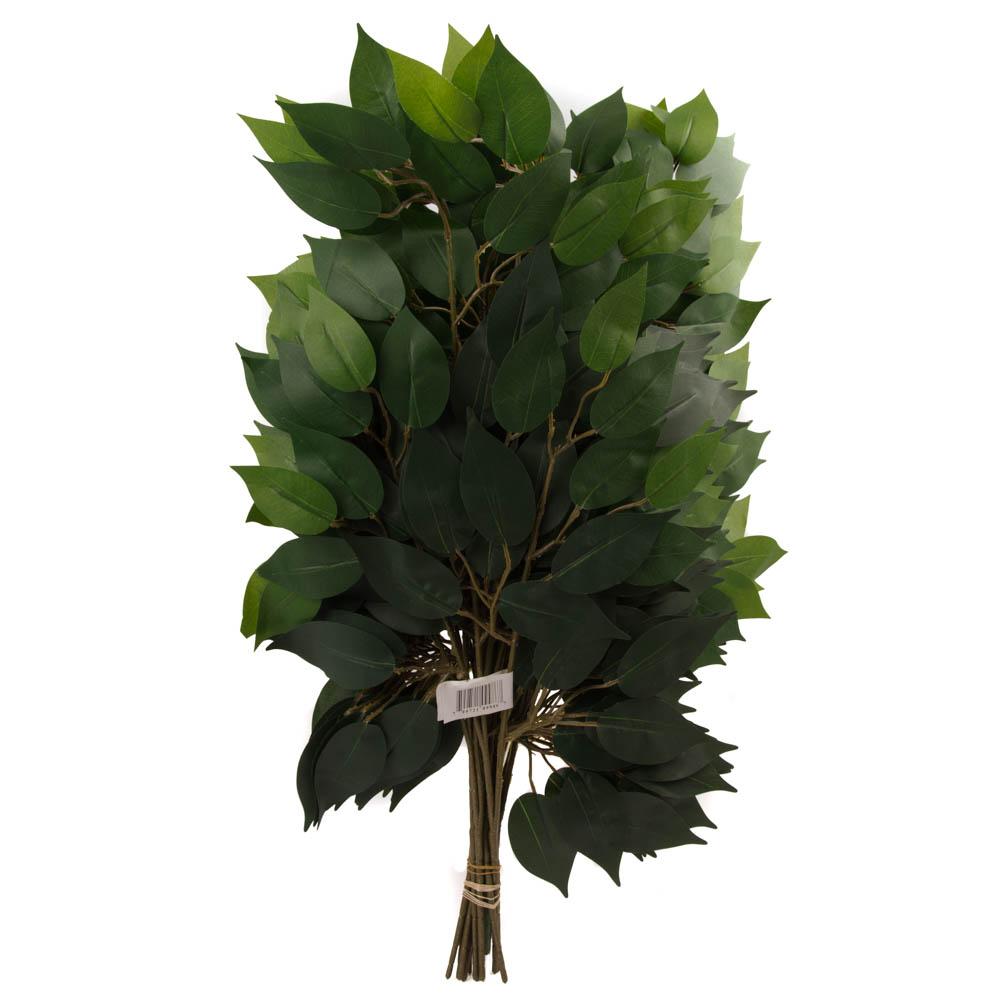 12 Stem Ficus